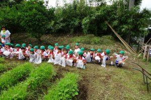 芋畑の草取り